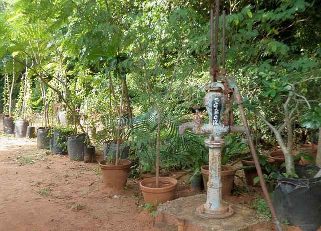 botanical-garden_03_resize