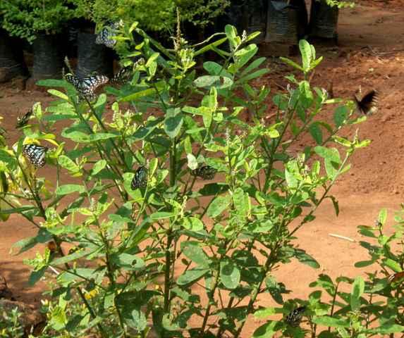 botanical-garden_11_resize