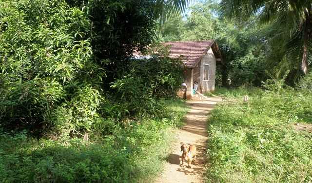 siddhartha-farm-3_resize