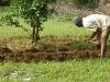 siddhartha-farm-7_resize