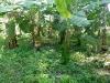 annapurna-farm_09_resize
