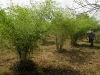 bamboo-research-centre_03_resize