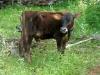 siddhartha-farm-8_resize